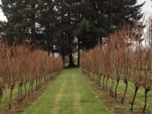 blog-lehman-wine-1